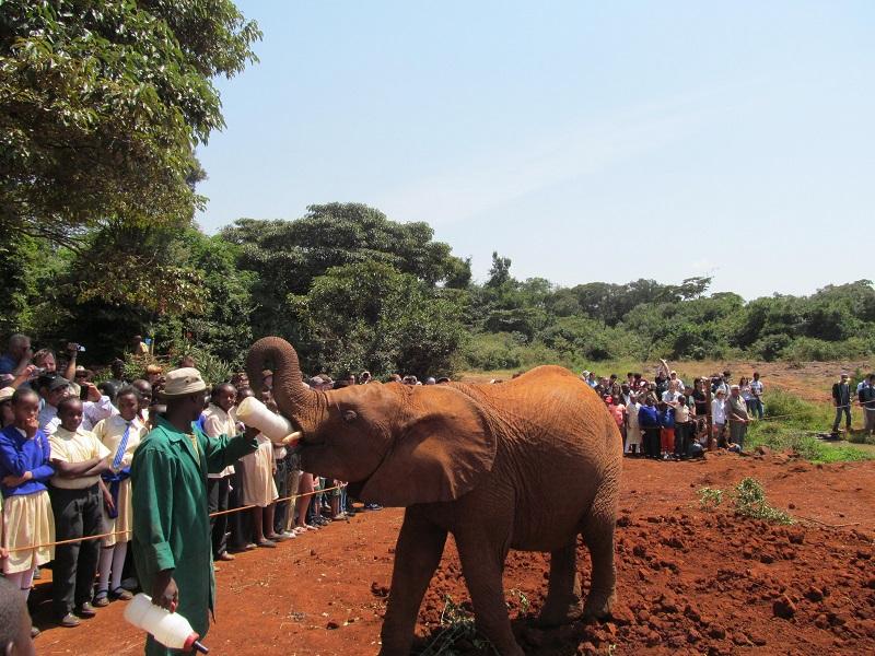 sirotiste za slonove